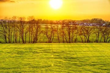 Photo sur Plexiglas Jaune Widok na złote pole i drzewa na tle zachodzącego słońca