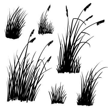 Set of hand-drawn beach grass. Vector silhouettes isolated on white.