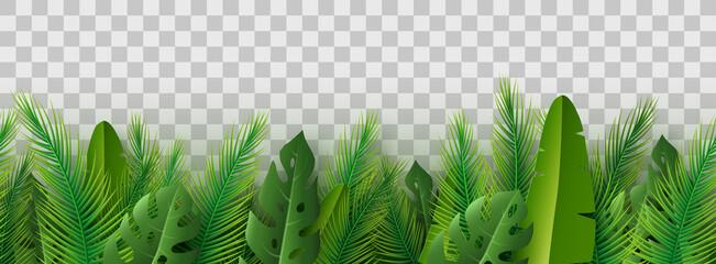 Summer palm leaves on transparent background.