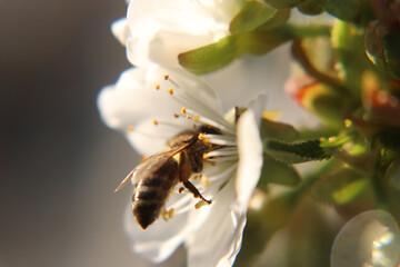 Photo sur Plexiglas Bee bee on a flower