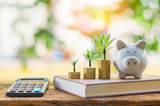 Piggy bank with the many coins with tree with the benefit from dividends and calculator put on the account book in the backyard, Saving money for business Investment and spending concept.