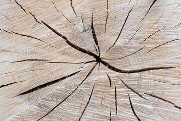 Matière de tronc d'arbre coupé