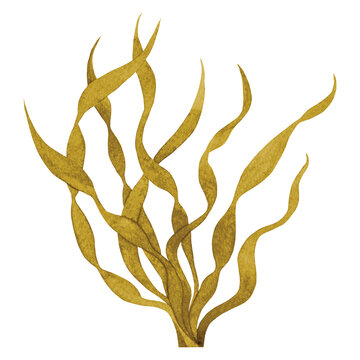 Brown Seaweed watercolor hand painted element isolated on white background. Watercolor illustration design.
