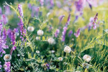 Multicoloured wildflowers blooming in the meadow