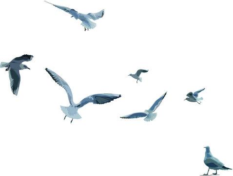 날으는 갈매기