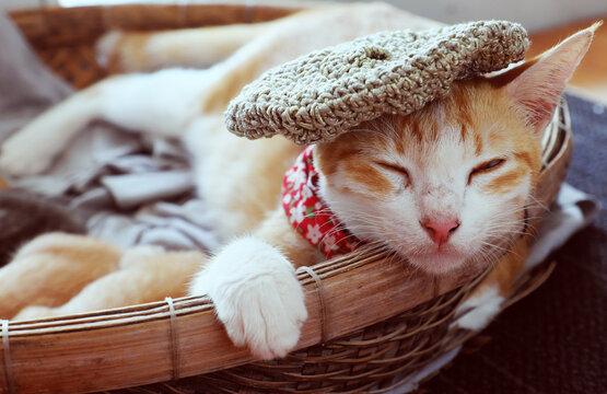 portrait of mother cat wear woolen hat, close eyes, lay down in basket with newborn kitten