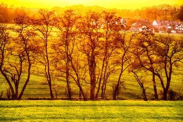 Poster Geel Widok na drzewa przy zachodzącym słońcu