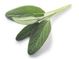 Fototapeta Sage leaves  (Salvia officinalis foliage) isolated w clipping paths, top view obraz