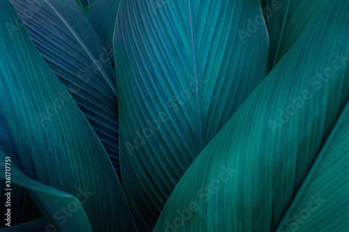 Wall mural closeup nature view of green leaf on background, fresh wallpaper banner concept
