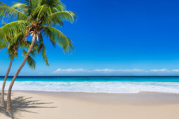 Beautiful beach with coco palms and turquoise sea in Jamaica island. Copy space in blue sky.