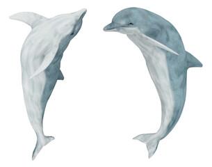 Zwei springende Delfine, Freisteller