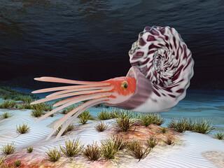Oso Ammonoids Ammonite