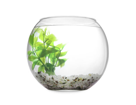 Glass fish bowl with clear water, plant and decorative pebble isolated on white