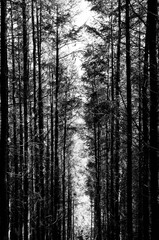 Tall Trees Scenic Path With Sunlight Overgrown