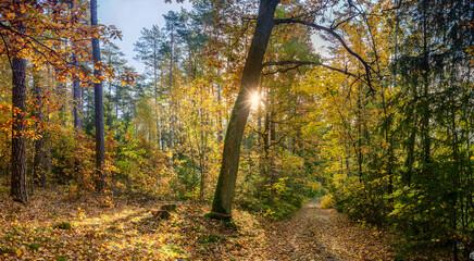 Obraz jesień w lasach na Mazurach w północno-wschodniej Polsce - fototapety do salonu