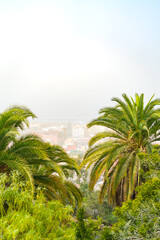 Sand storm against palm trees and cactus. Mist with sand and dust from Africa. Calima on Canary Islands. Tenerife, Puerto de la Cruz.