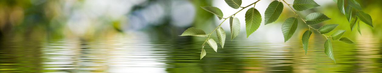 Image of a branch with leaves above the surface of the water. Wide format.