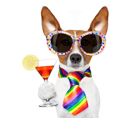 Papiers peints Chien de Crazy gay pride dog with rainbow