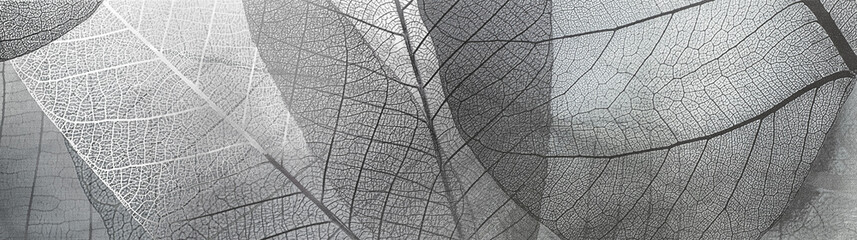 Poster Squelette décoratif de lame texture abstract black and white pattern of transparent leaves