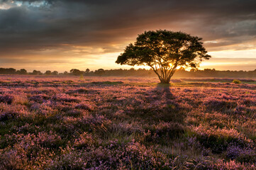 Photo Blinds Nature Sunset in the Heather field