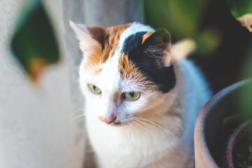 Gefleckte Katze sitzt neben Blumentopf