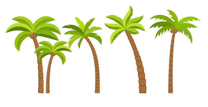 Palm tree vector island coconut cartoon icon. Palmtree island desert isolated tropical icon