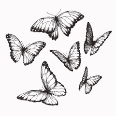 Foto op Plexiglas Vlinders in Grunge Vector vintage set of butterflies with different positions of wings in engraving style. Hand drawn illustration of nymphalid isolated on white.