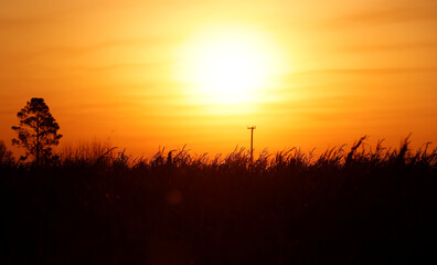 Corn plants are seen at sunset in a farm during the spread of the coronavirus disease (COVID-19) in Argentina