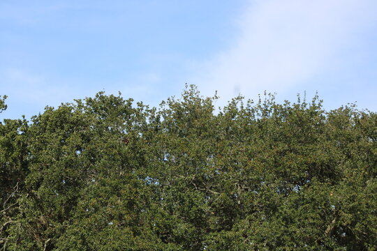 trees and sky, tree, sky, nature, green, blue, trees, landscape, forest, summer, spring, leaves, cloud, outdoors, wood, field, grass, plant, clouds, branches, day, pine, park, foliage, branch, view
