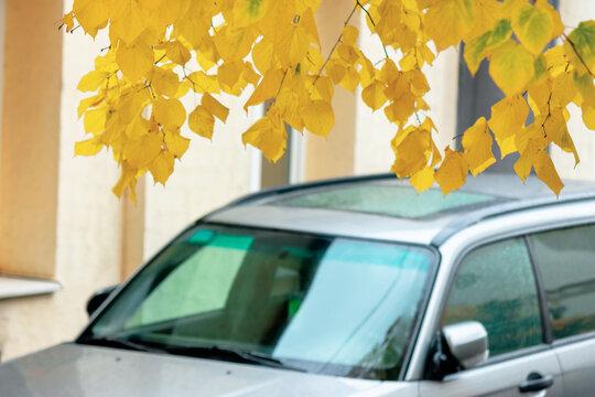 Uzhgorod, Ukraine - OCT 13, 2013: silver subaru forester suv on the pavement. autumn weather with yellow foliage. legendary awd vehicle