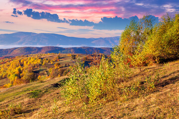 autumnalrural landscape at sunrise. trees in colorful foliage. meadow with yellow grass. distant valley full of fog. ridge on the horizon. sky with clouds in morning light