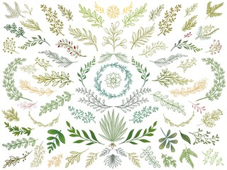 Wall Mural - Decor leaves. Hand drawn greenery branches, nature green plants leaf and decorative sketch leaves isolated vector Illustration set. Branch and flower, vintage floral decorative botanical