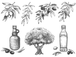 Wall Mural - Engravied olive oil. Hand drawn olives tree, sketch oil bottle and olive branches with leaves vector illustration set. Branch olive tree, plant oil vegetarian