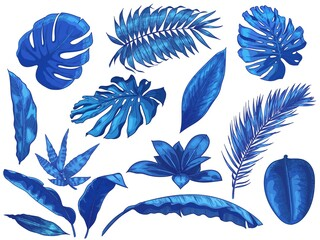 Wall Mural - Blue tropical leaves. Exotic palm tree leaf, botanical monstera and floral isolated vector illustration set. Summer floral monstera, jungle palm natural