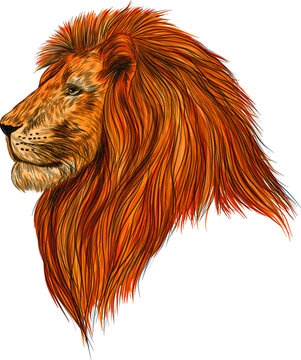 the head of a lion realism orange vector illustration