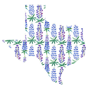 Texas map silhouette with hand drawn watercolor bluebonnets texture. The lone star state