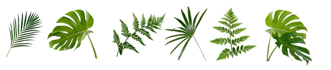 set of green monstera palm and tropical plant leaf on white background for design elements, Flat layd.clipping path
