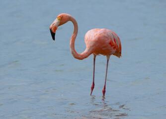 Wall Murals Flamingo Pink flamingo