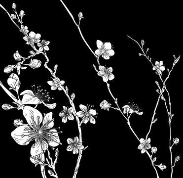 A Japanese cherry peach blossom sakura flower print pattern background design