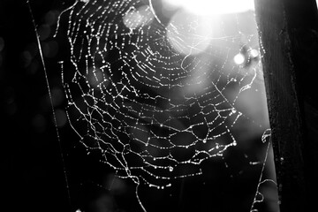 Close-up Of Water Drops On Spider Web Wall mural