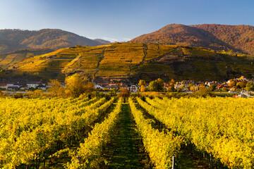 autumn vineyard and Spitz in Wachau region, Austria