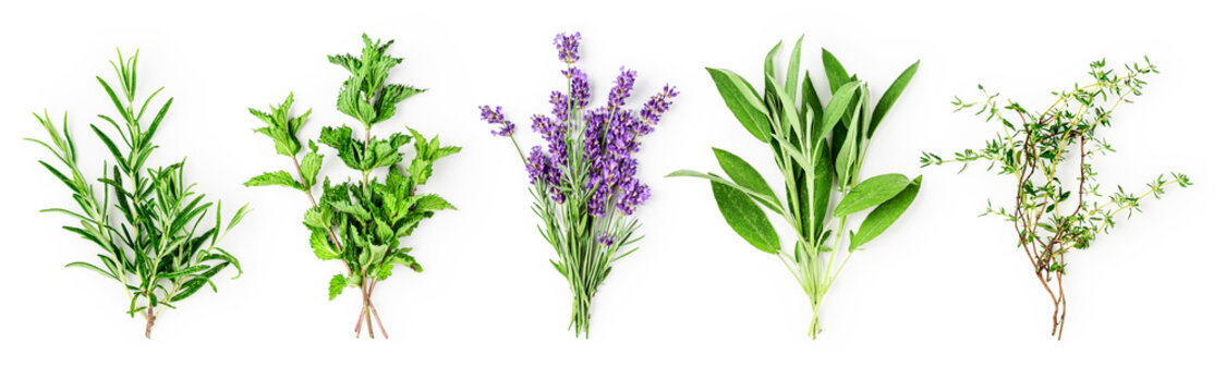 Rosemary, mint, lavender, sage and thyme collection