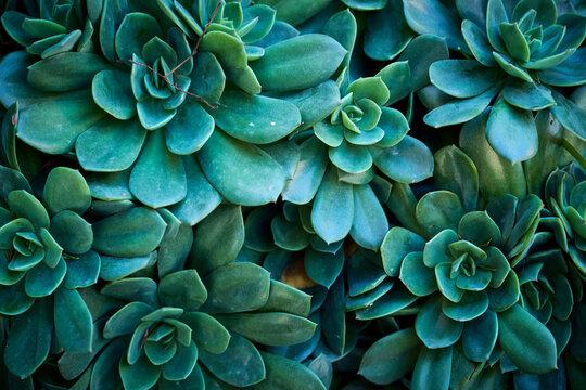Full Frame Shot Of Succulent Plantl