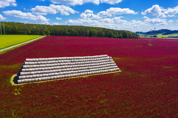 Crimson clover field with heap of bales from above