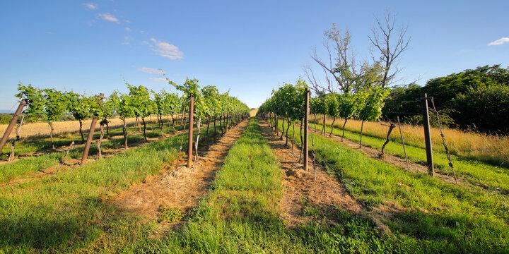 Kulturlandschaft Weinviertel