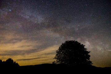 Germany, Beautiful moving stars of milky way galaxy over black forest trees silhouette lonely tree in dark night