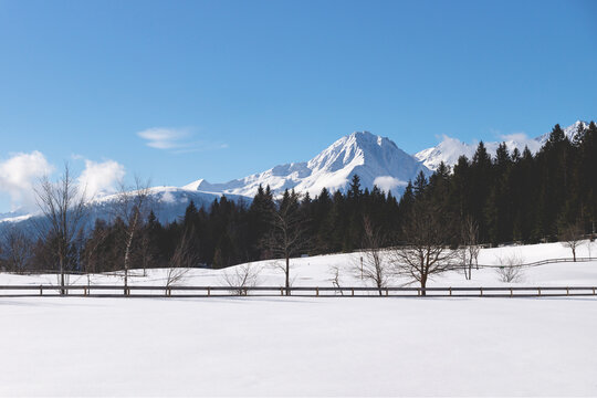 Sunlit snow mountain panorama with evergreen forest and fence in winterl andscape, Seefeld, Tirol, Austria