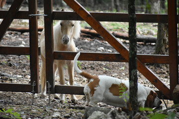 Autocollant pour porte Panda Horse Standing In A Farm