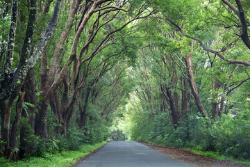 Foto auf Acrylglas Olivgrun A tree lined road in Northern Rivers, New South Wales, Australia