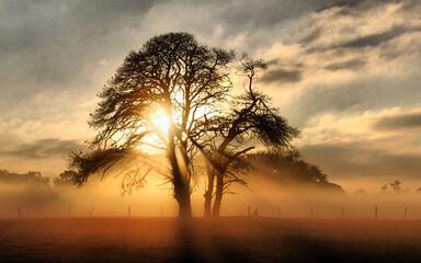 Obraz Silhouette Trees On Field Against Sky During Sunset - fototapety do salonu